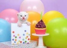 Vit kattunge i en födelsedaggåva med en muffin Royaltyfri Foto