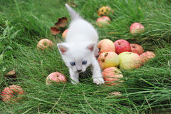 Vit kattunge i gräset Royaltyfri Fotografi
