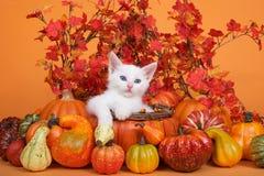 Vit kattunge i höstkorgen, sidor bakgrund, pumpor Arkivbild