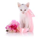 Vit kattunge med ett rosa band och en blomma av en pion Arkivbilder