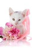 Vit kattunge med ett rosa band och en rosa blomma av en pion. Arkivfoton