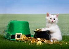 Vit kattunge med krukan av guld i gräs royaltyfri foto