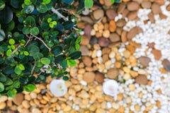 Vit kiselstenbakgrundstextur arkivbilder