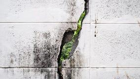 Vit knäckt tegelstenvägg Royaltyfri Fotografi