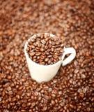 Vit kopp i kaffebönor Royaltyfria Bilder