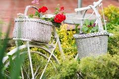 Vit korg med blommor som hänger på den gamla cykeln i trädgård arkivbilder