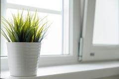 Vit kruka med grönt gräs på fönsterbrädan Royaltyfri Foto