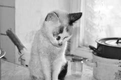 Vit ledsen katt Royaltyfria Bilder