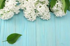 vit lila blomma på blå träbakgrund Bästa sikt med kopieringsutrymme royaltyfria foton