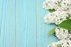 vit lila blomma på blå träbakgrund Bästa sikt med kopieringsutrymme royaltyfri foto