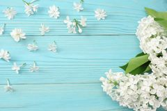 vit lila blomma på blå träbakgrund Bästa sikt med kopieringsutrymme arkivfoton