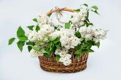 Vit lila i en korg med en vit etikett Arkivfoto