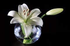 Vit lilja i en glass vas Arkivfoton