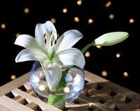 Vit lilja i ett exponeringsglas Arkivfoto