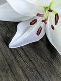 Vit lilja som isoleras på trä arkivfoto