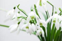 Vit liljekonvalj i bukett Arkivfoton