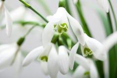 Vit liljekonvalj i bukett Royaltyfria Foton