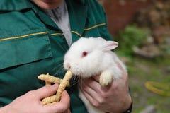 Vit liten kanin i hand Royaltyfri Fotografi