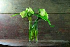 Vit lotusblomma med veckkronbladet Arkivbilder
