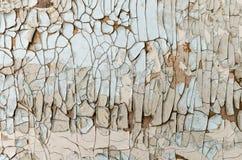 Vit målarfärg för gammal skalning på en träyttersida, textur royaltyfri bild