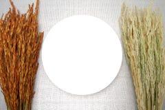 Vit maträtt med örat av ris på brun läderbakgrund Royaltyfri Bild