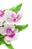 Vit med den purpurfärgade orkidén Arkivbilder