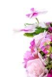 Vit med den purpurfärgade orkidén Royaltyfria Bilder