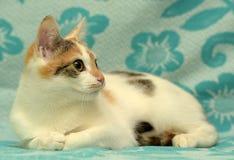 Vit med den röda och bruna kattungen Arkivfoton