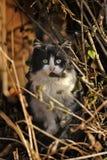 Vit med den svarta lösa katten Royaltyfria Foton