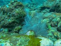 Vit mjuk korall som är undervattens- med korallbakgrund Dykapparatdykning på den färgrika reven Undervattens- fotografi av de liv royaltyfri bild