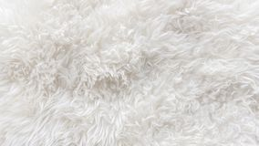 Vit mjuk ull texturerar bakgrund, sömlös bomull, naturlig fårull för ljus, närbildtextur av vit fluffig päls, ullintelligens arkivbild