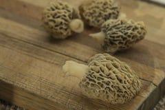 Vit morel plocka svamp på skärbräda, all naturligt och valt I Arkivfoton