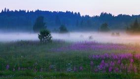Vit morgonmist på en blomma sommaräng royaltyfri fotografi