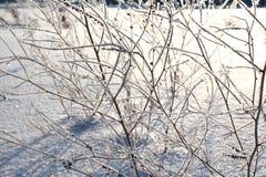 Vit mousserande frost av is smyckar filialerna av torrt gräs i vinter på en klar frostig dag arkivbilder