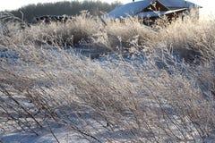 Vit mousserande frost av is smyckar filialerna av torrt gräs i vinter på en klar frostig dag royaltyfri bild