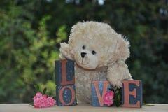 Vit nallebjörn med förälskelsestenar och rosor arkivbilder