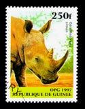 Vit noshörning (den Cerotherium simumen), infödd djurserie, circ Arkivbilder