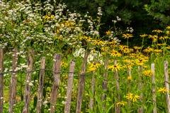 Vit och guling blommar bak ett gammalt posteringstaket Arkivbild