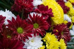 Vit och guling för blommafärg röd Arkivfoto