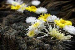 Vit- och gulingblommor stänger sig upp på kanfasbakgrund arkivfoto