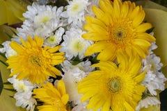 Vit- och gulingherber blommar i bukett Gul och vit bröllopbukett vektor för ro för illustration för bukettdekor blom- Arkivbild