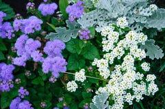 Vit- och lilablommor arkivfoton