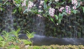 Vit och purpurfärgad orkidé nära vattenfallet Royaltyfri Foto