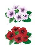 Vit och röd blommabuskepetunia Royaltyfri Foto