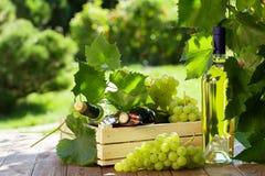 Vit- och rött vinflaska, vinranka och druvor royaltyfri bild