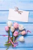 Vit och rosa färger fjädrar tulpan, rosa band och tömmer etiketten på bl Royaltyfria Foton
