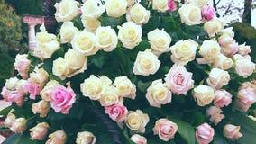 Vit- och rosa färgrobukett