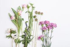 Vit- och rosa färgvårblommor Royaltyfri Bild