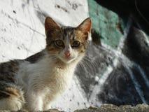 Vit- och strimmig kattvilsekommet djurkattunge arkivfoton