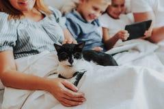 Vit och svart katt som förestående sover av kvinna royaltyfri foto